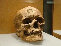 Crâne de l'Homme de Cro-Magnon-40000 ans (France)