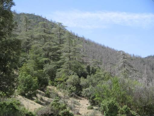 Aurès algérien