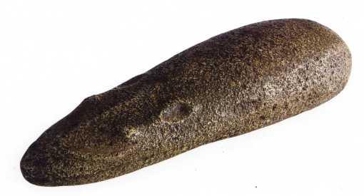 Goundi ou rongeur du désert (Erg Admer)