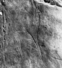 Gravure gazelle (Sedrata)